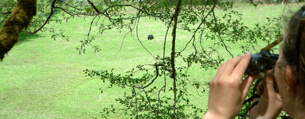 A participant is in the corner of the image with binoculars showing you the view of an expansive green meadow with a black bear grazing in the middle
