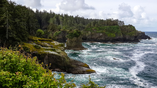 View of the tree-lined rocky coastline and churning white water from the end of the Cape Flattery trail