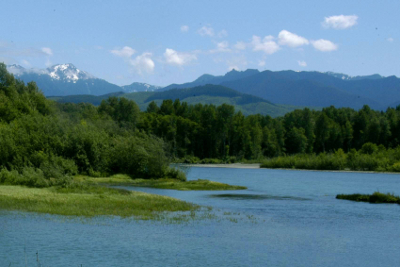 Estuary, forest, and clear view of the Elwha River mountain range in the background