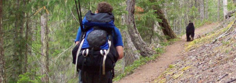 This Olympic Peninsula hiker is hiking behind a Black Bear using a hiking trail