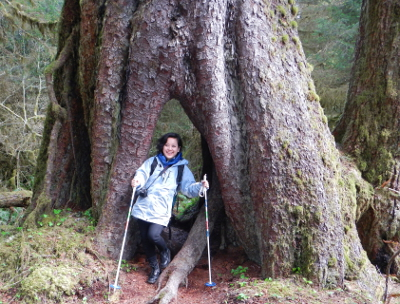 A smiling woman hikes through a large Sitka Spruce Tree in the Hoh Rainforest