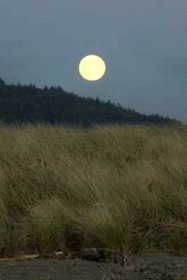 Large Full Moon gleaming over beach vegetation on a clear night at Hobuck Beach in Neah Bay, Washington