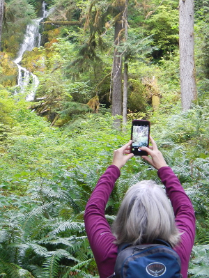 A participant raises her phone to take a photo of a waterfall among a sea of large sword ferns