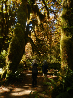 Two friends looking at the thick moss coating the Big Leaf Maple trees on the Hall of Mosses trail