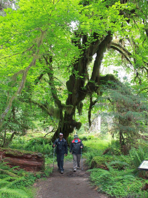 Two participants hiking side-by-side in the Hoh Rainforest with trekking poles