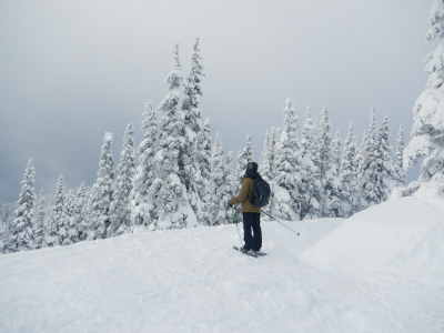 A scene of snow laden subalpine trees with a tour participant on snowshoes in the distance