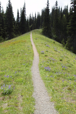 Narrow hiking trail bordered by a wildflower meadow and subalpine trees in Olympic National Park