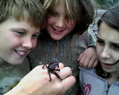 Close-up of three kids examining a Kelp Crab found on a Pacific Northwest tide pool tour
