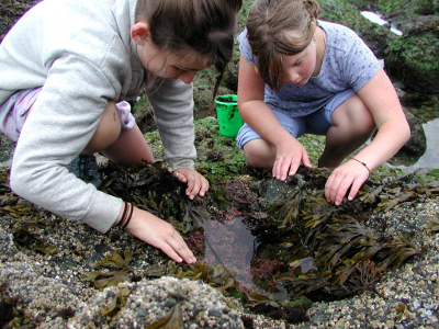 Two girls actively looking in a tidepool