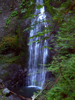 A beautiful Olympic National Park waterfall framed by plants