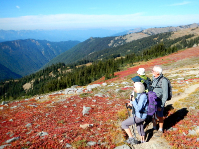Participants looking towards the subalpine firs and mountains in a sea of low shrub huckleberry that has turned red