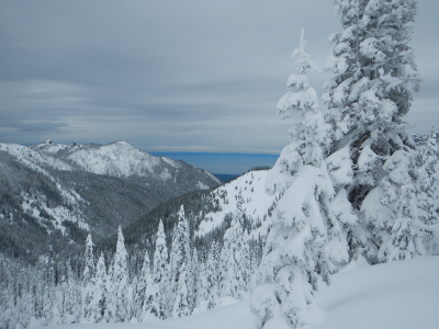 View of the Salish Sea, snowy peaks, and snow-laden trees from Hurricane Ridge on an Olympic National Park Tour