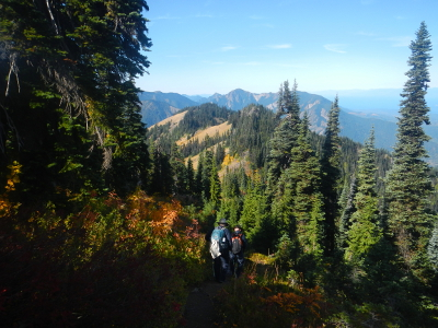 The backpacks of two hikers are barely visible as they hike among Subalpine Fir and shrubs ablaze in fall color