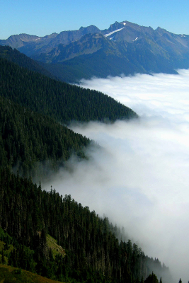 Fog covering the Hoh River valley floor with a clear view of the Olympic Mountains in the distance