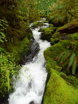 A fast-moving Elwha River tributary in Olympic National Park is pictured with bright green mossy banks