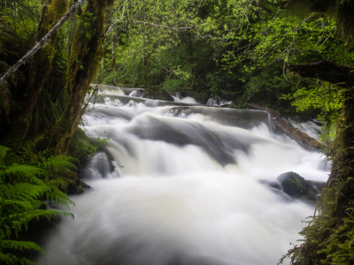 Long exposure of an Olympic Peninsula stream that gives the water a magical feel