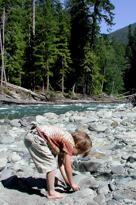 Boy picking up river rocks with a restored Olympic National Park river in the background