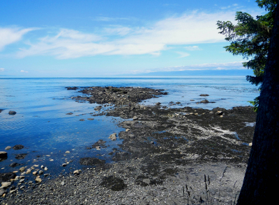 View of tidepool habitat, Strait of Juan de Fuca, and British Columbia