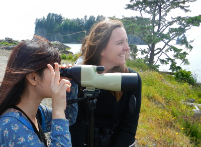 A woman looks through a spotting scope at a Bald Eagle attaching a gull in the Quillayute River