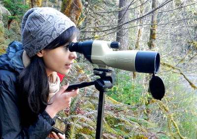 Side profile of a woman looking through a spotting scope at a herd of Roosevelt Elk in a Geyser Valley meadow