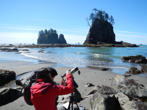 Two adults digiscope on Second Beach in Olympic National Park with the Pacific Ocean, sea stacks, and islands in the distance