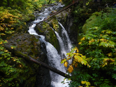 Three chutes of water stream over the Sol Duc Falls as viewed from the bridge above the river gorge in the fall