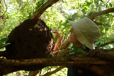Naturalist and hiking guide Carolyn Wilcox touching a termite mound in Costa Rica jungle