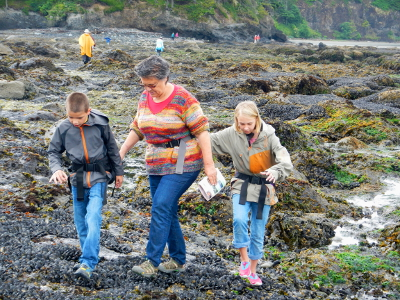 Grandparent and two grandchildren walking gingerly on their first mussel bed