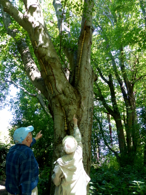 Two seniors point to a tree with artwork as seen from the Port Angeles Fine Arts Center
