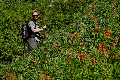 Olympic hiker going uphill next to a lovely subalpine meadow of red and blue wildflowers